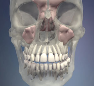 3d image of dentition